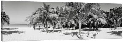 Palm Trees On The Beach In B&W, Negril, Jamaica Canvas Print #PIM11188