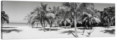 Palm Trees On The Beach In B&W, Negril, Jamaica Canvas Art Print
