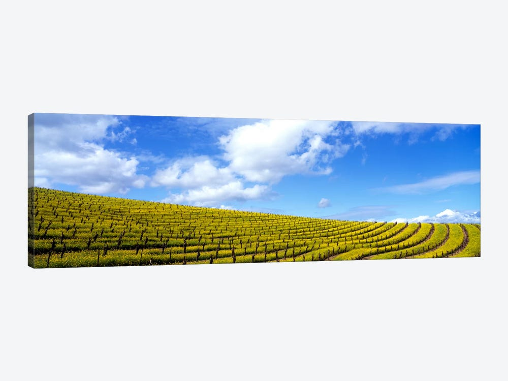 Mustard Fields, Napa Valley, California, USA by Panoramic Images 1-piece Canvas Art Print