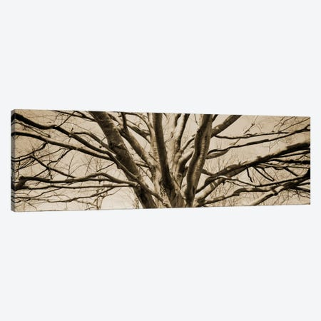 Low angle view of a bare tree Canvas Print #PIM11215} by Panoramic Images Canvas Print