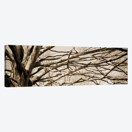 Low angle view of a bare tree 2 Canvas Print #PIM11216} by Panoramic Images Canvas Art Print