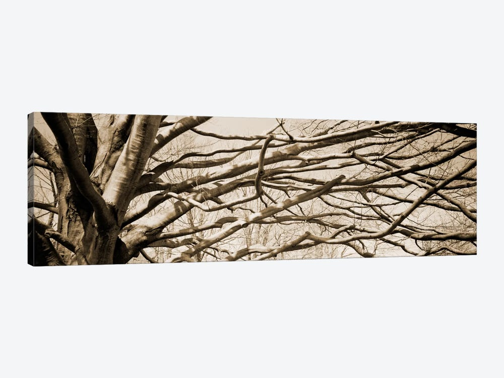 Low angle view of a bare tree 2 by Panoramic Images 1-piece Canvas Art
