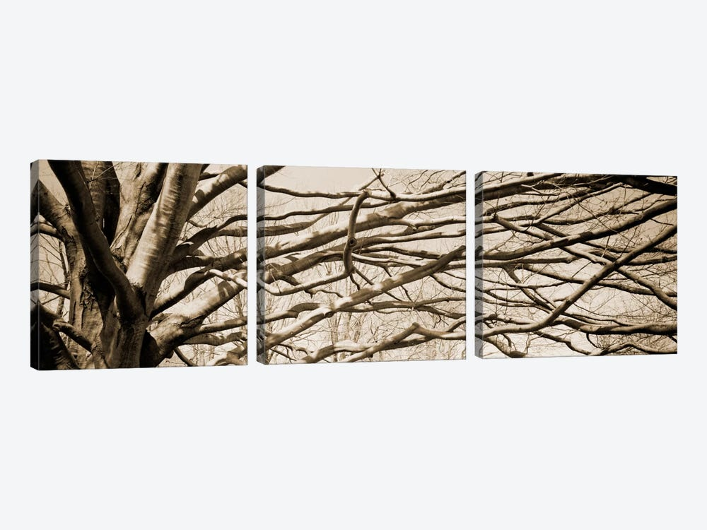 Low angle view of a bare tree 2 by Panoramic Images 3-piece Canvas Art