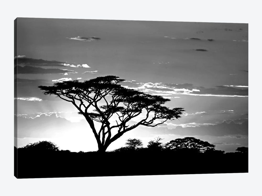 Silhouette of trees in a field, Ngorongoro Conservation Area, Arusha Region, Tanzania by Panoramic Images 1-piece Canvas Print