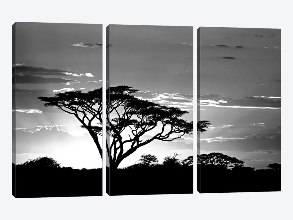 Silhouette of trees in a field, Ngorongoro Conservation Area, Arusha Region, Tanzania by Panoramic Images 3-piece Art Print
