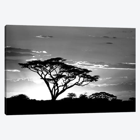 Silhouette of trees in a field, Ngorongoro Conservation Area, Arusha Region, Tanzania Canvas Print #PIM11219} by Panoramic Images Canvas Artwork