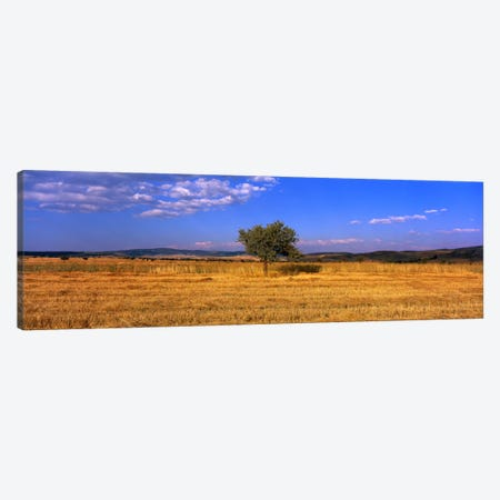 Wheat Field Central Anatolia Turkey Canvas Print #PIM1129} by Panoramic Images Canvas Art