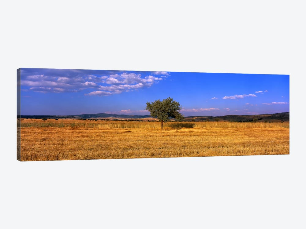 Wheat Field Central Anatolia Turkey by Panoramic Images 1-piece Canvas Wall Art