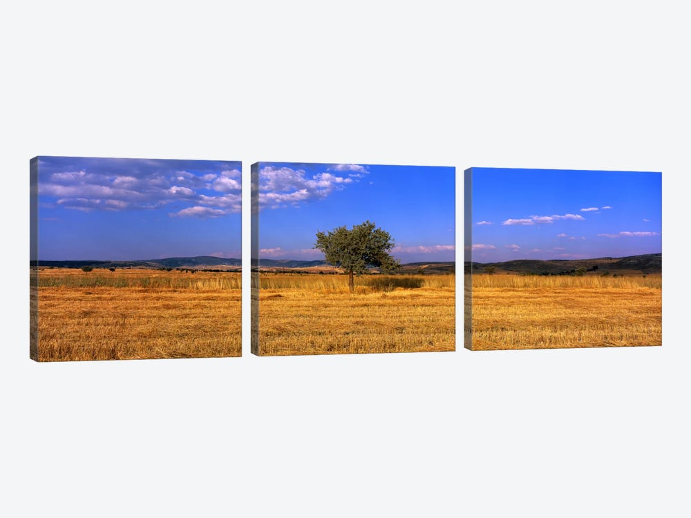 Wheat Field Central Anatolia Turkey by Panoramic Images 3-piece Canvas Artwork