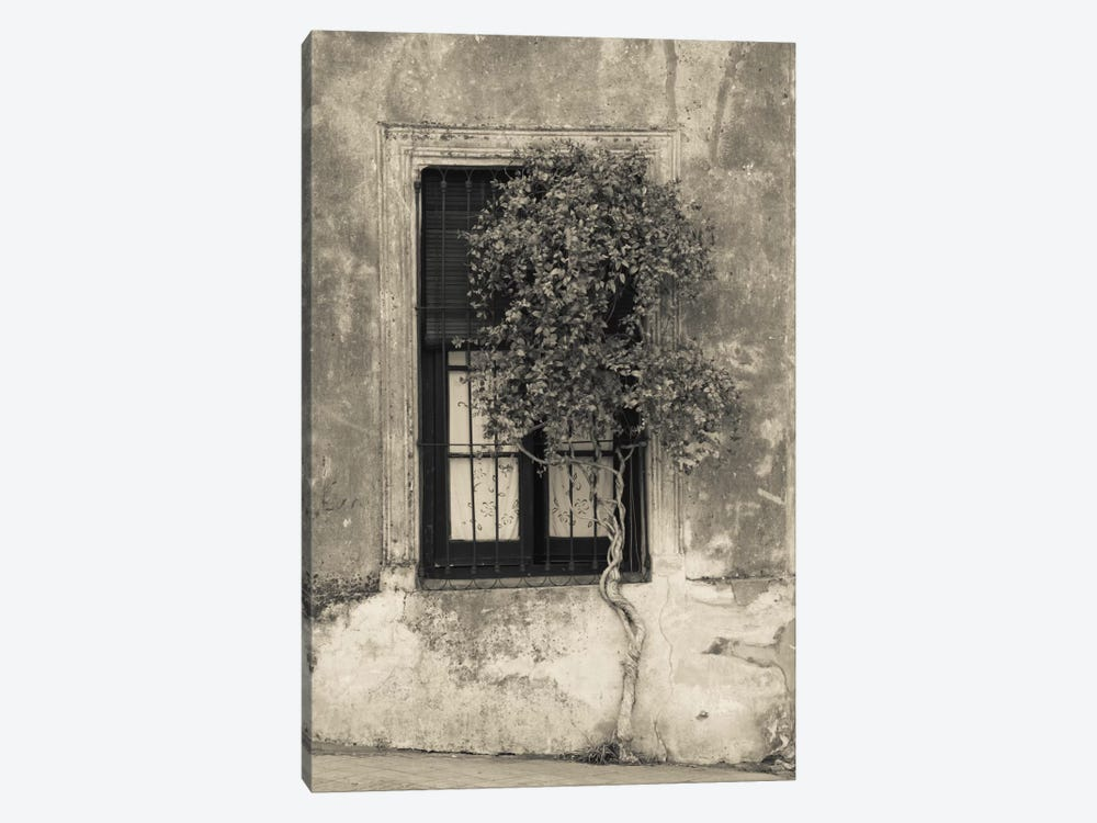Tree in front of the window of a house, Calle San Jose, Colonia Del Sacramento, Uruguay by Panoramic Images 1-piece Canvas Artwork