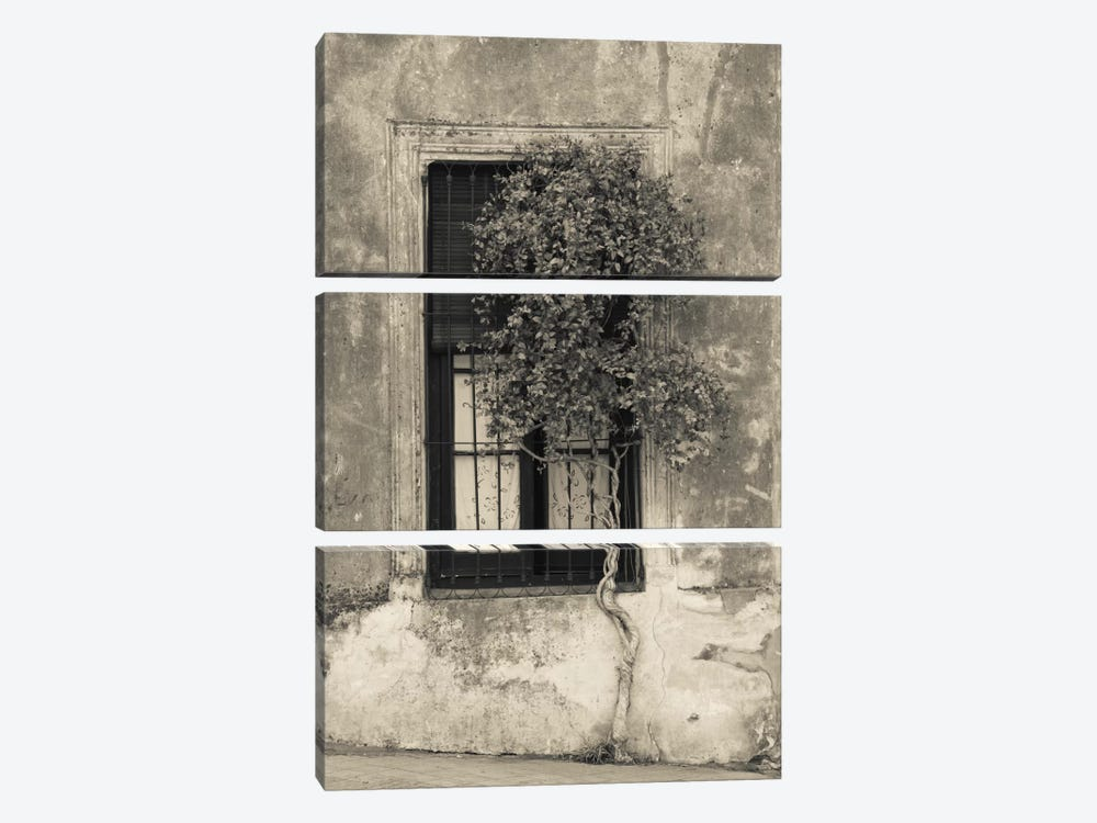 Tree in front of the window of a house, Calle San Jose, Colonia Del Sacramento, Uruguay by Panoramic Images 3-piece Canvas Wall Art