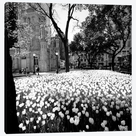 White tulips near a water tower, Chicago Water Tower, Michigan Avenue, Chicago, Cook County, Illinois, USA Canvas Print #PIM11327} by Panoramic Images Art Print