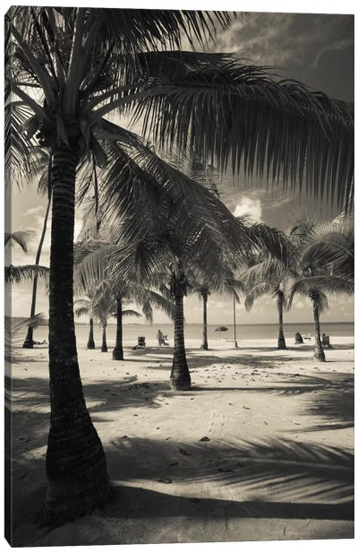 Palm trees on the beach, Playa Luquillo Beach, Luquillo, Puerto Rico Canvas Print #PIM11543