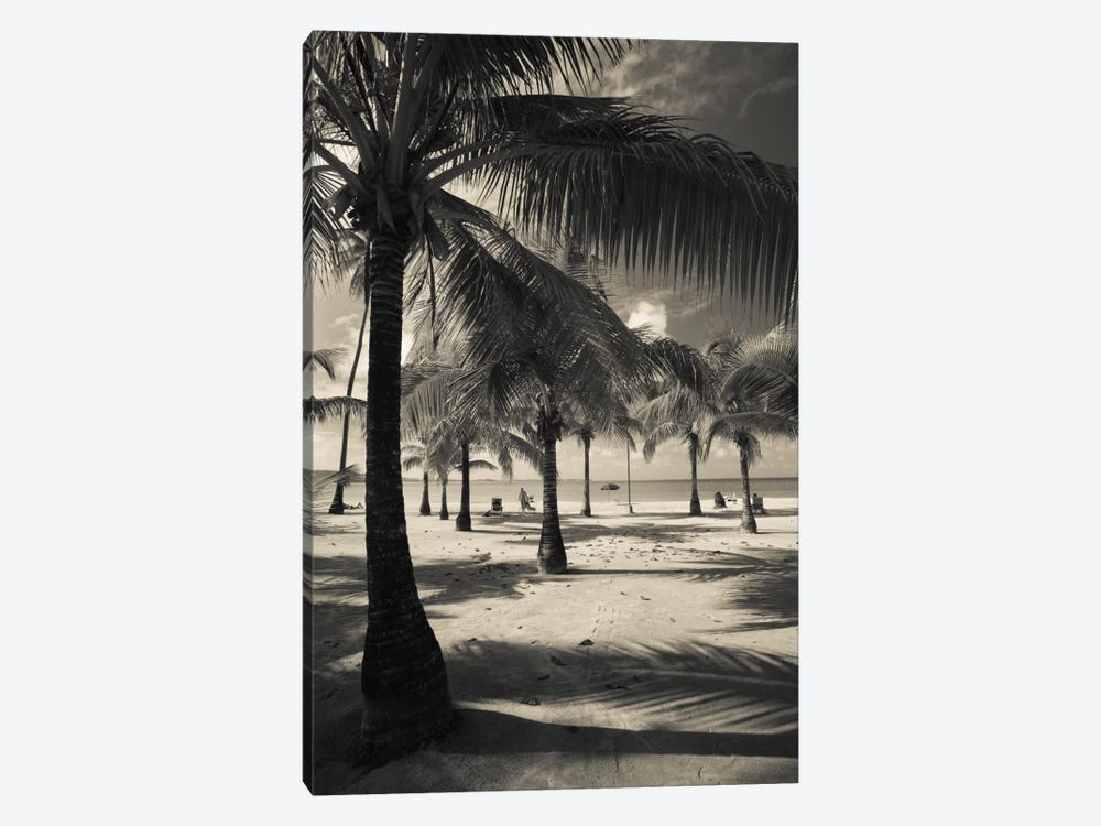 Palm trees on the beach, Playa Luquillo Beach, Luquillo, Puerto Rico by Panoramic Images 1-piece Canvas Art Print