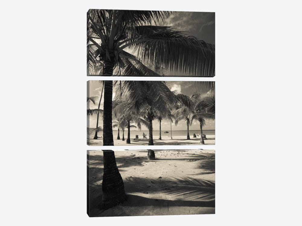 Palm trees on the beach, Playa Luquillo Beach, Luquillo, Puerto Rico by Panoramic Images 3-piece Canvas Print