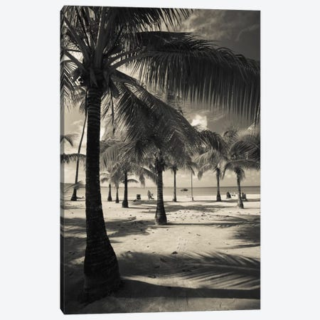Palm trees on the beach, Playa Luquillo Beach, Luquillo, Puerto Rico 3-Piece Canvas #PIM11543} by Panoramic Images Canvas Art