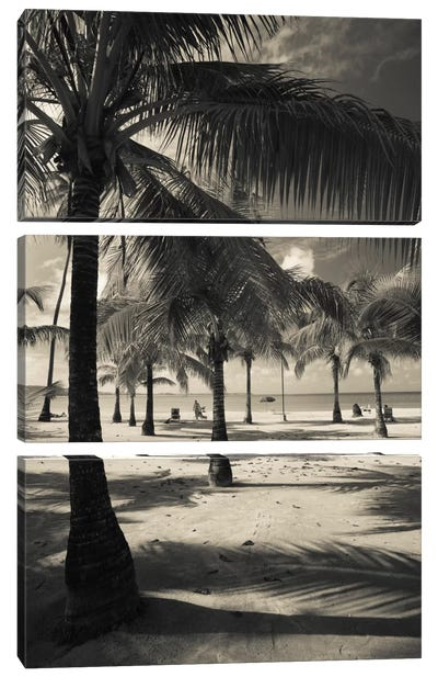 Palm trees on the beach, Playa Luquillo Beach, Luquillo, Puerto Rico Canvas Art Print