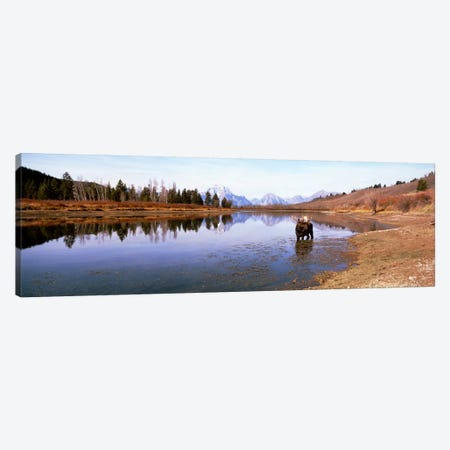Bull Moose Grand Teton National Park WY USA Canvas Print #PIM1163} by Panoramic Images Canvas Wall Art