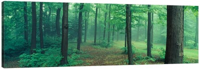 Chestnut Ridge Park, Orchard Park, New York State, USA Canvas Print #PIM1165
