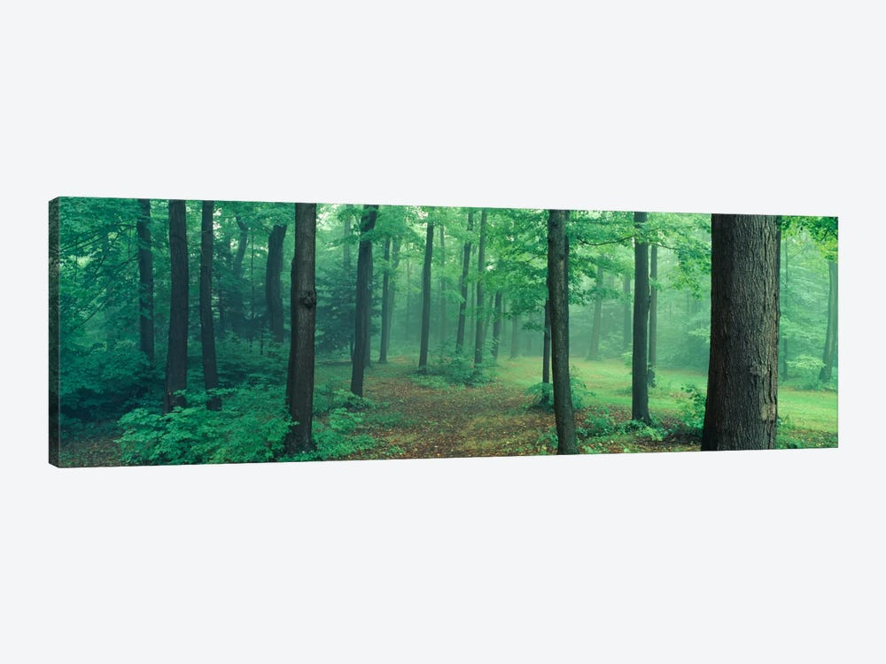 Chestnut Ridge Park, Orchard Park, New York State, USA by Panoramic Images 1-piece Canvas Art