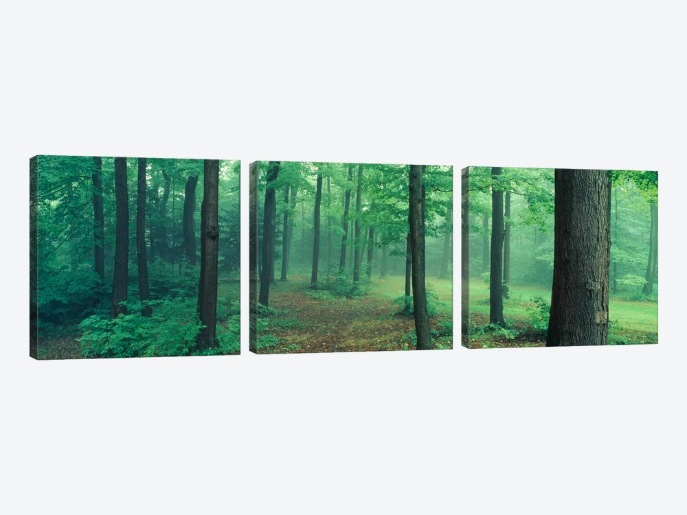 Chestnut Ridge Park, Orchard Park, New York State, USA by Panoramic Images 3-piece Canvas Art