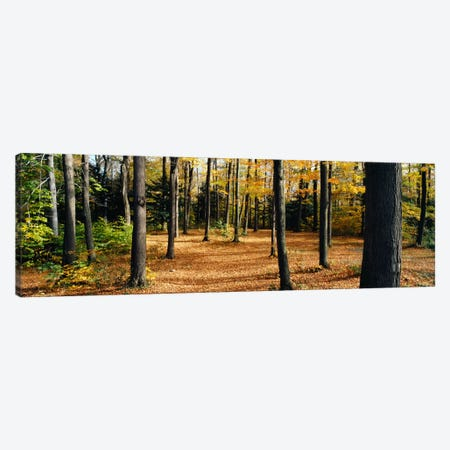Chestnut Ridge Park Orchard Park NY USA Canvas Print #PIM1166} by Panoramic Images Canvas Art Print