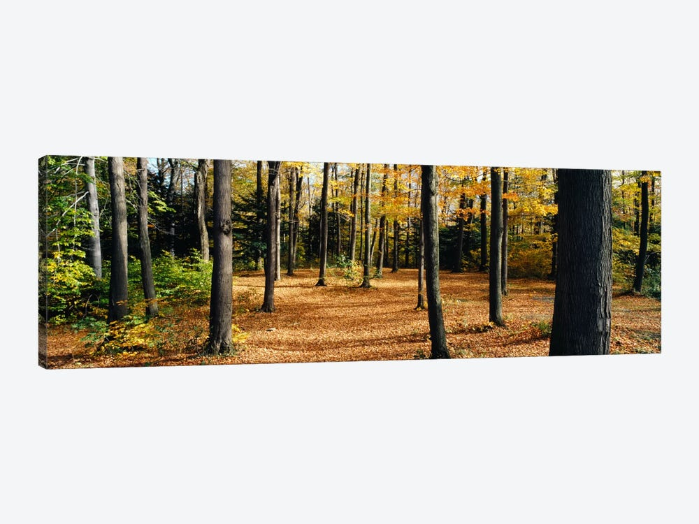Chestnut Ridge Park Orchard Park NY USA by Panoramic Images 1-piece Canvas Art Print