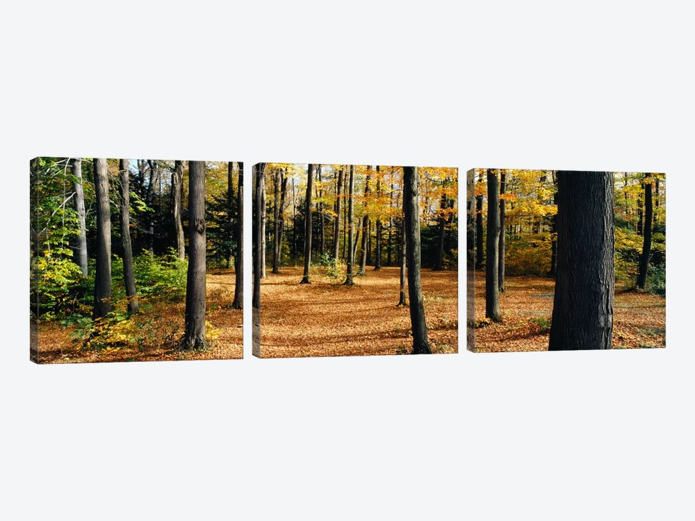 Chestnut Ridge Park Orchard Park NY USA by Panoramic Images 3-piece Canvas Art Print