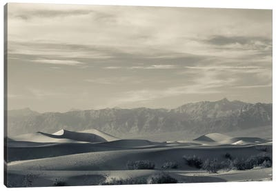 Sand dunes in a desert and Mountain Range, Mesquite Flat Sand Dunes, Death Valley National Park, Inyo County, California, USA Canvas Art Print