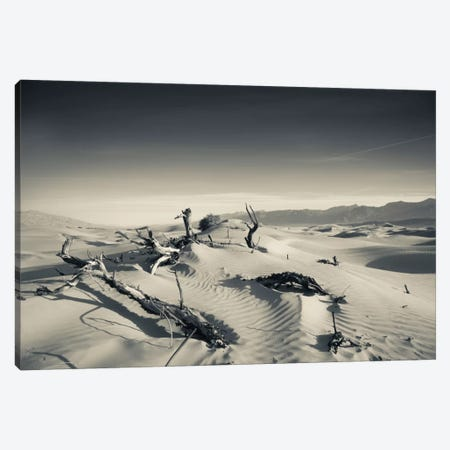Sand dunes and Trees in a desert, Mesquite Flat Sand Dunes, Death Valley National Park, Inyo County, California, USA Canvas Print #PIM11684} by Panoramic Images Canvas Wall Art