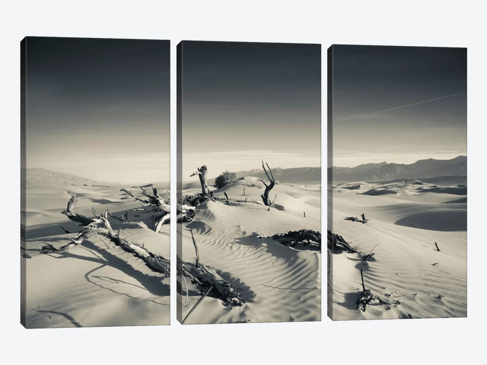 Sand dunes and Trees in a desert, Mesquite Flat Sand Dunes, Death Valley National Park, Inyo County, California, USA by Panoramic Images 3-piece Canvas Artwork