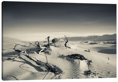 Sand dunes and Trees in a desert, Mesquite Flat Sand Dunes, Death Valley National Park, Inyo County, California, USA Canvas Art Print