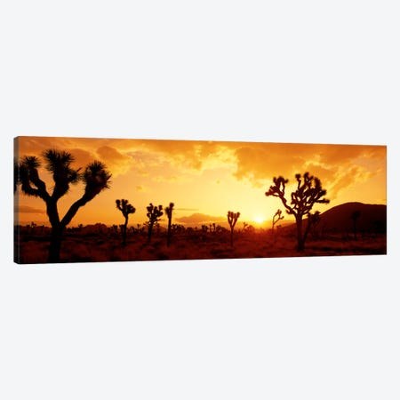 SunsetJoshua Tree Park, California, USA Canvas Print #PIM116} by Panoramic Images Art Print