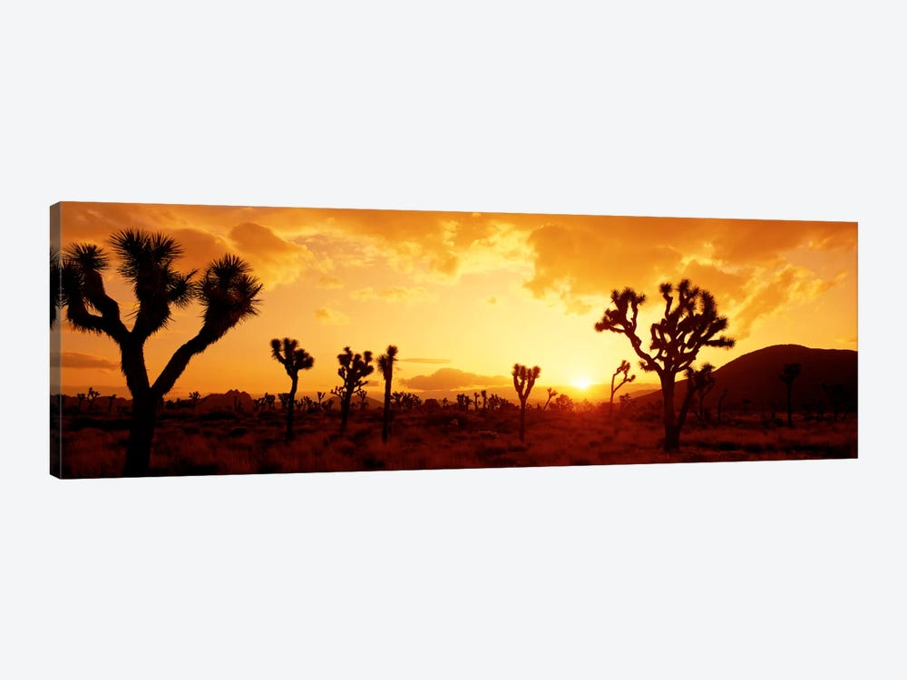 SunsetJoshua Tree Park, California, USA by Panoramic Images 1-piece Canvas Artwork
