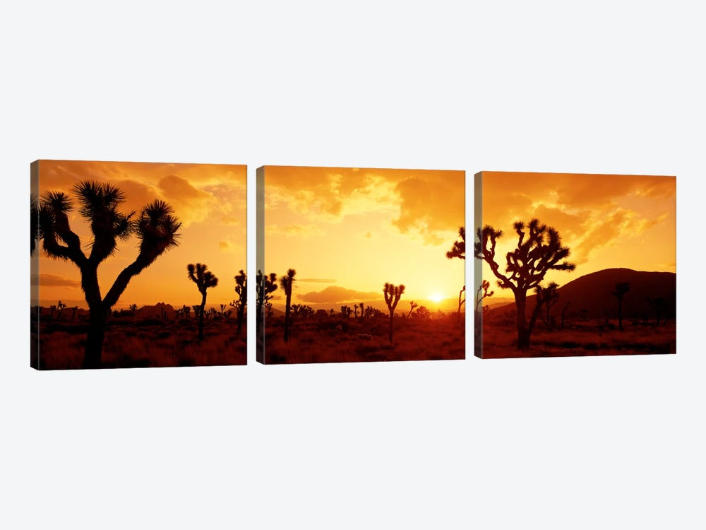 SunsetJoshua Tree Park, California, USA by Panoramic Images 3-piece Canvas Wall Art