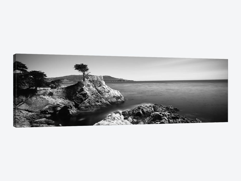 Cypress tree at the coast, The Lone Cypress, 17 mile Drive, Carmel, California, USA by Panoramic Images 1-piece Canvas Artwork