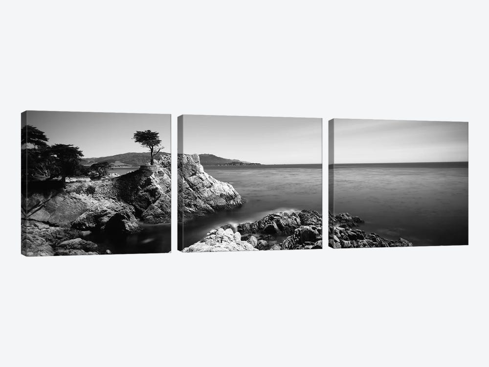 Cypress tree at the coast, The Lone Cypress, 17 mile Drive, Carmel, California, USA by Panoramic Images 3-piece Canvas Art