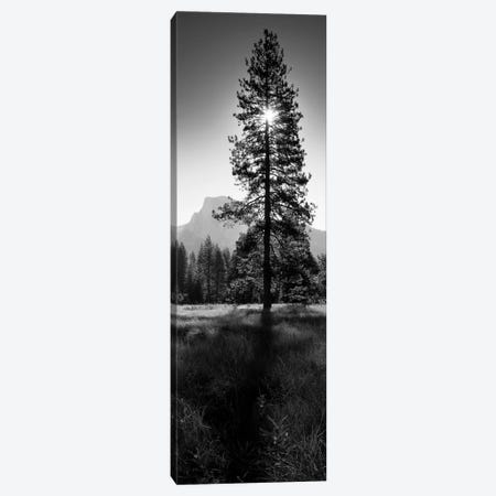 Sun Behind Pine Tree, Half Dome, Yosemite Valley, California, USA Canvas Print #PIM11826} by Panoramic Images Canvas Artwork