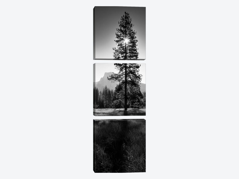 Sun Behind Pine Tree, Half Dome, Yosemite Valley, California, USA by Panoramic Images 3-piece Canvas Print