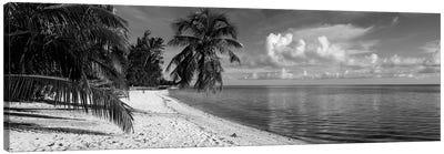 Palm trees on the beach, Matira Beach, Bora Bora, French Polynesia Canvas Art Print
