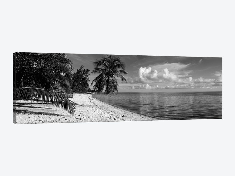 Palm trees on the beach, Matira Beach, Bora Bora, French Polynesia by Panoramic Images 1-piece Canvas Print