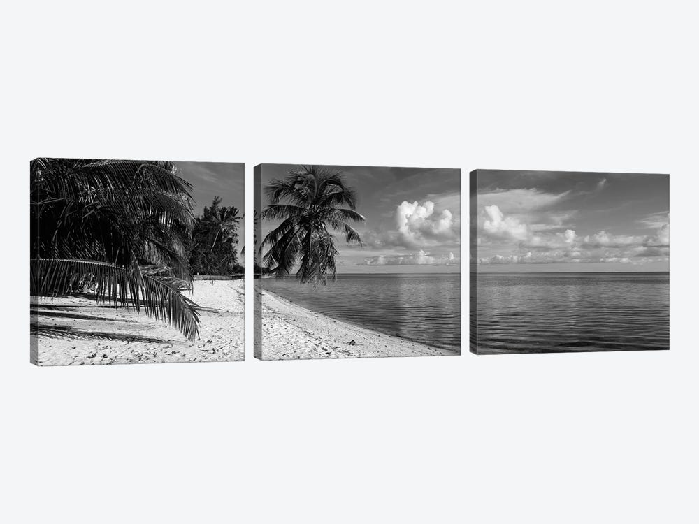 Palm trees on the beach, Matira Beach, Bora Bora, French Polynesia by Panoramic Images 3-piece Canvas Art Print