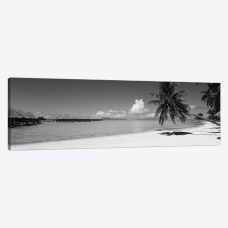 Palm Tree On The Beach, Moana Beach, Bora Bora, Tahiti, French Polynesia Canvas Print #PIM11838} by Panoramic Images Canvas Wall Art