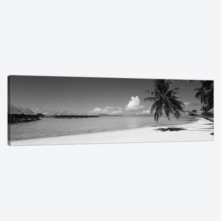 Palm Tree On The Beach, Moana Beach, Bora Bora, Tahiti, French Polynesia Canvas Print #PIM11838} by Panoramic Images Canvas Wall Art