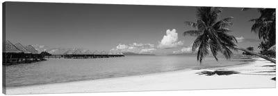 Palm Tree On The Beach, Moana Beach, Bora Bora, Tahiti, French Polynesia Canvas Art Print