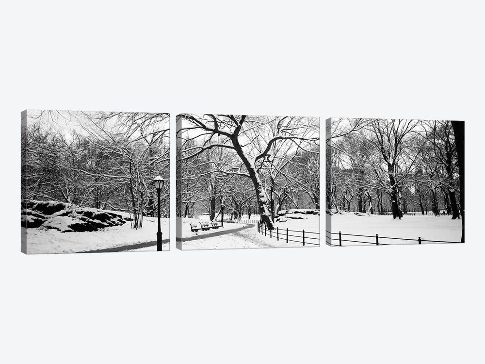 Bare trees during winter in a park, Central Park, Manhattan, New York City, New York State, USA by Panoramic Images 3-piece Canvas Art