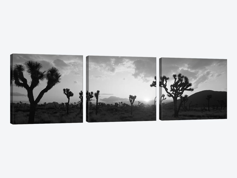 Sunset, Joshua Tree Park, California, USA by Panoramic Images 3-piece Canvas Art Print