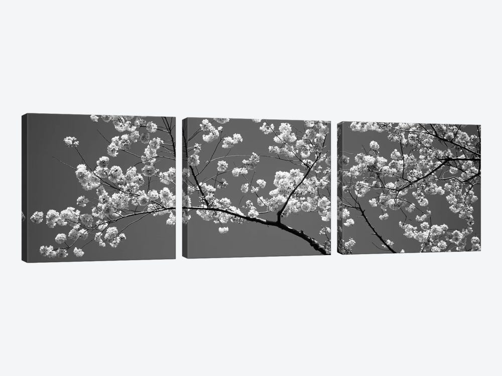 Cherry Blossoms Washington DC USA #2 by Panoramic Images 3-piece Canvas Wall Art