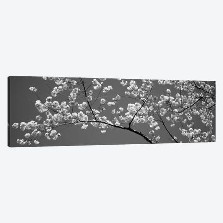 Cherry Blossoms Washington DC USA #2 3-Piece Canvas #PIM11922} by Panoramic Images Canvas Wall Art