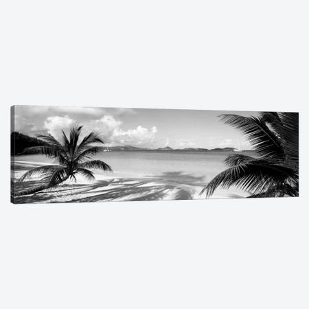 Palm trees on the beach, US Virgin Islands, USA Canvas Print #PIM11936} by Panoramic Images Canvas Wall Art